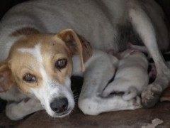 Cão cego socorre cadelinha que dava à luz na rua