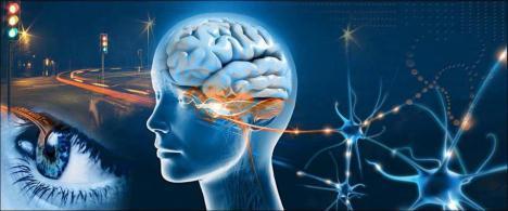 cerebro...