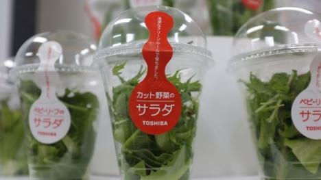 toshiba-vegetais8