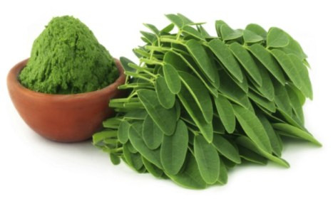 Moringa, a planta que purifica a água e poderia acabar com a fome mundial 1