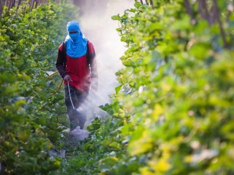 farmworker-pesticide_ittipon_shutterstock.piramidal.net