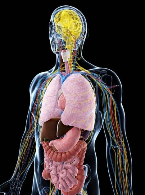 Por-que-el-estomago-es-el-segundo-cerebro-2