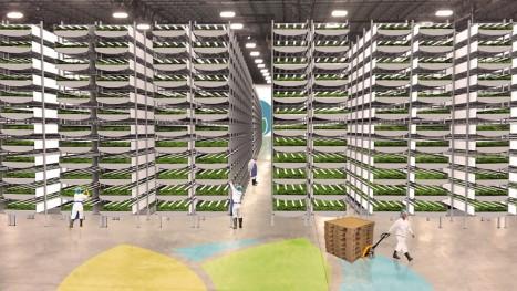 Maior fazenda vertical do mundo usará 95% menos água com método mais produtivo 1