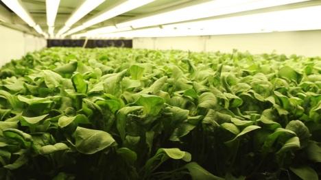 Maior fazenda vertical do mundo usará 95% menos água com método mais produtivo 3