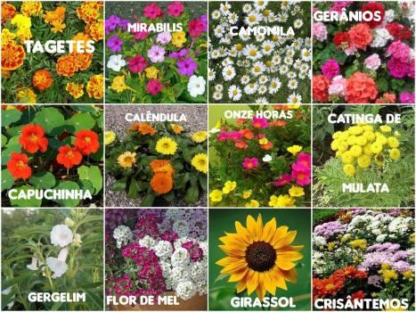 conhecam-as-12-principais-flores-que-auxiliam-muito-a-sua-horta